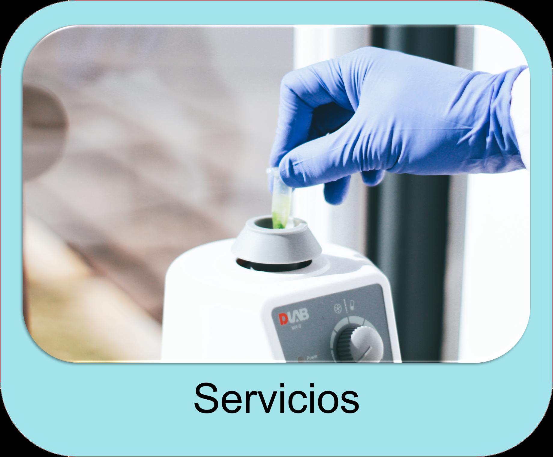servicios link